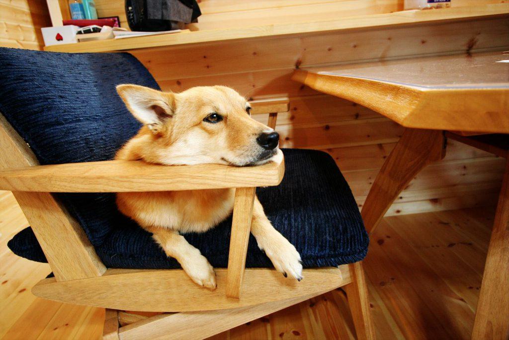 ロフト,玄関収納付き1LDK平屋の犬|茨城の注文住宅,ログハウスのような木の家を低価格で建てるならエイ・ワン
